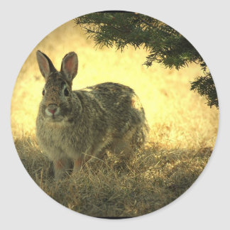 Wild Rabbits Stickers