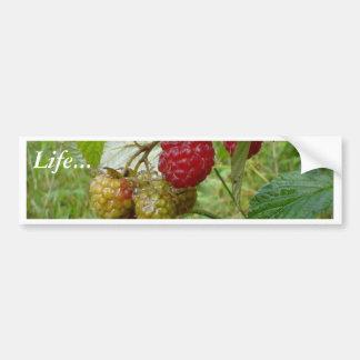 Wild Raspberri Car Bumper Sticker