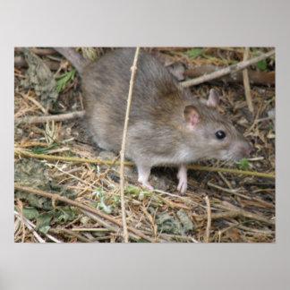 Wild Rat Field Trip Print