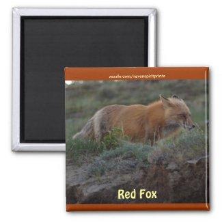 Wild Red Fox Animal Wildlife Fun Magnet zazzle_magnet