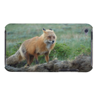 Wild Red Fox Animal Wildlife Wild Animal Fox-Lover iPod Case-Mate Case