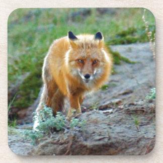 Wild Red Fox Vixen Wildlife Photo Art Drink Coaster