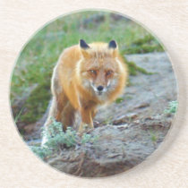Wild Red Fox Vixen Wildlife Photo Art Sandstone Coaster