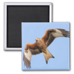 Wild Red Kites 2 Inch Square Magnet