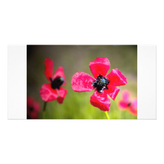 Wild Red Poppies Card