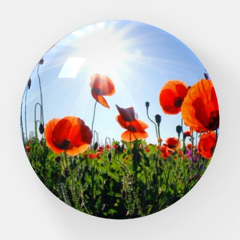 Wild Red Poppies Flowers Paperweight