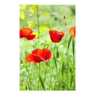 Wild red poppy flower flyer