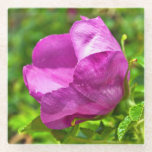 "Wild Rose Coaster<br><div class=""desc"">Wild roses are found across Alaska. This rose was photographed in Juneau.</div>"