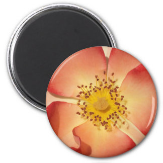 Wild Rose Fridge Magnets
