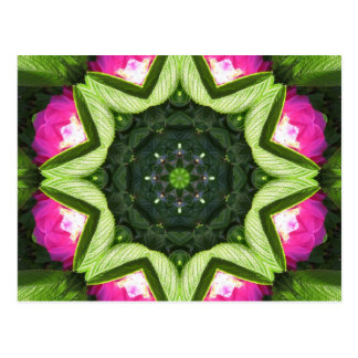 Wild Rose Lotus Mandala Post Cards