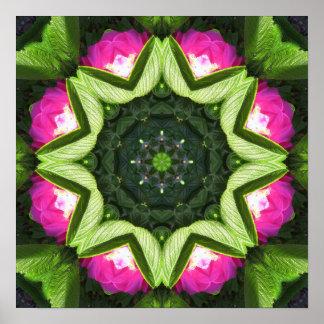 Wild Rose Lotus Mandala Poster