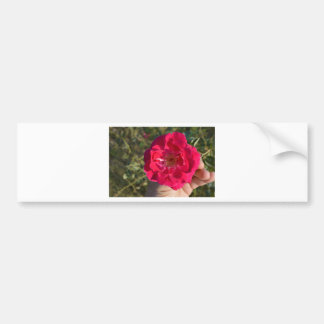 Wild Rose of Holy Place India Bumper Sticker