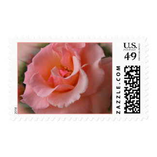 Wild Rose Stamps Peach Flowers Postage Stamps