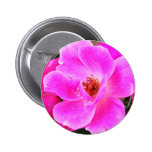 Wild Roses Buttons