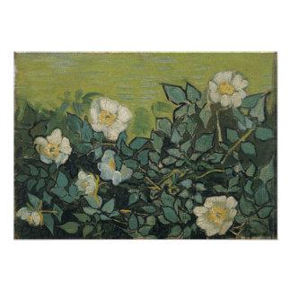 Wild Roses by Vincent Van Gogh Photo Print