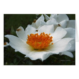 Wild Roses Stationery Note Card