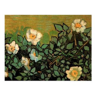 Wild Roses (F597) Van Gogh Fine Art Postcard