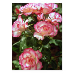 Wild roses  flowers postcard