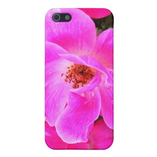 Wild Roses iPhone 5 Cases