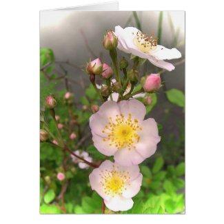 Wild Roses Valentine Greeting Card