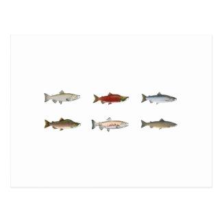 Wild Salmon Post Card