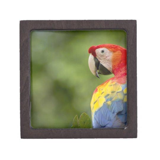 Wild scarlet macaw, rainforest, Costa Rica Gift Box