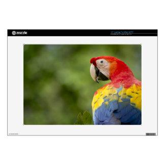 Wild scarlet macaw, rainforest, Costa Rica Laptop Skin