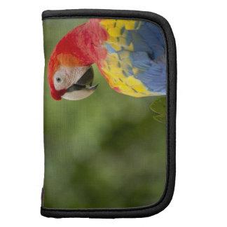 Wild scarlet macaw, rainforest, Costa Rica Planner