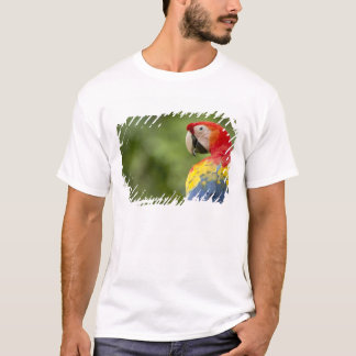 Wild scarlet macaw, rainforest, Costa Rica T-Shirt