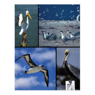Wild sea birds postcard