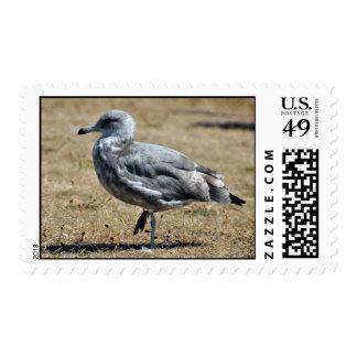 Wild Seagle Postage Stamp