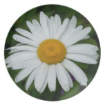Wild Shasta Daisy Unique Photo Plate
