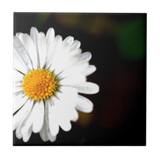 Wild Single Daisy Flower Tile