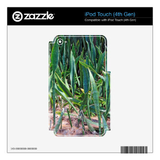 Wild Snake Plant Outside in Florida iPod Touch 4G Skins