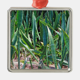 Wild Snake Plant Outside in Florida Metal Ornament