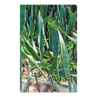 Wild Snake Plant Outside in Florida Stationery