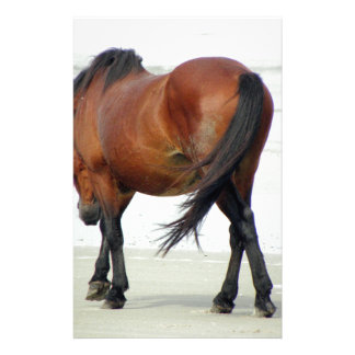 Wild Spanish Mustang OBX NC Stationery