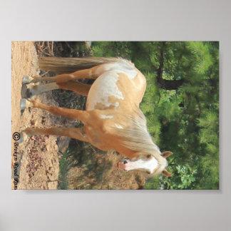 Wild Spanish Mustang Paint Horse Stallion Poster