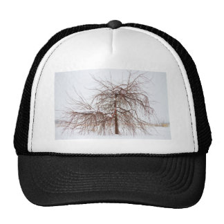 Wild Springtime Winter Tree Mesh Hat