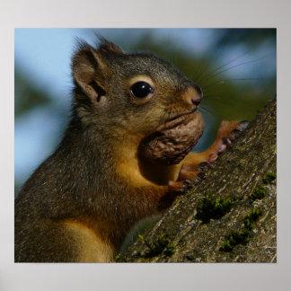 Wild Squirrel Photo Poster