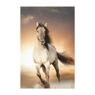 Wild Stallion Running In Sunset Canvas Print