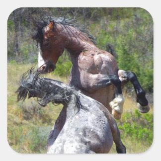 Wild Stallions Fighting Theodore Roosevelt NP Square Sticker
