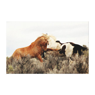 Wild Stallions in Battle Canvas Print