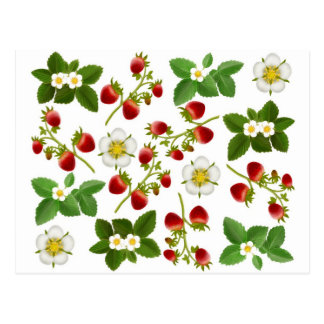 Wild Strawberries Postcard