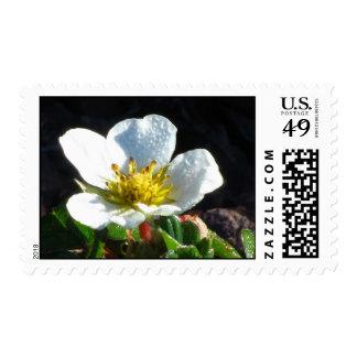 Wild Strawberry Blossom Postage Stamp