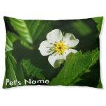 Wild Strawberry Flower Pet Bed