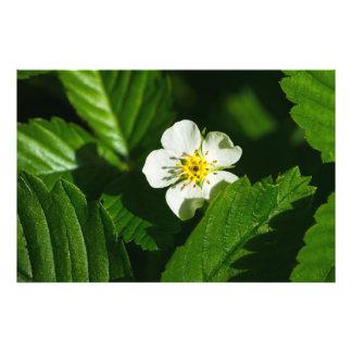 Wild Strawberry Flower Photo Print