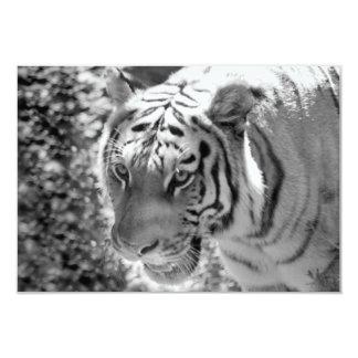 Wild Striped Tiger Black and White Card