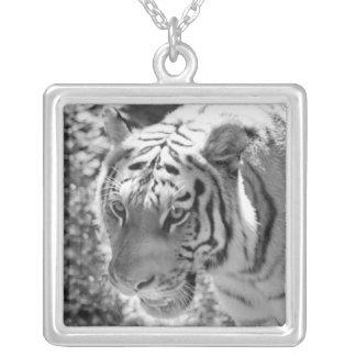 Wild Striped Tiger Black and White Square Pendant Necklace