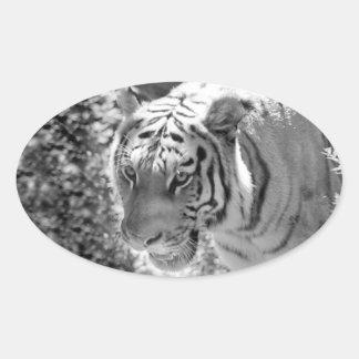 Wild Striped Tiger Black and White Oval Sticker